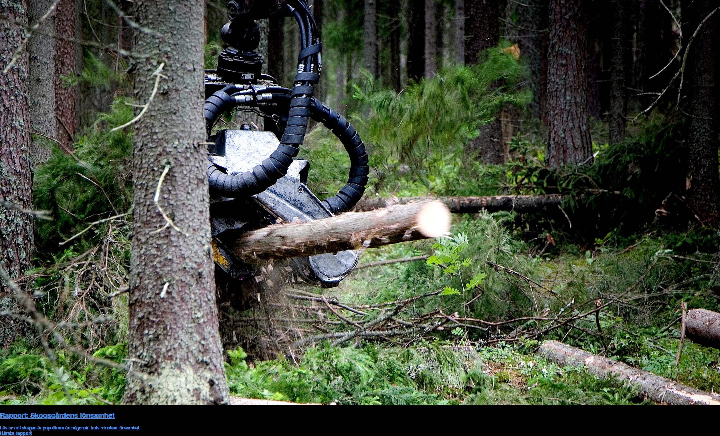 Rapport: Skogsgårdens lönsamhet  Läs om att skogen är populärare än någonsin trots minskad lönsamhet. Hämta rapport