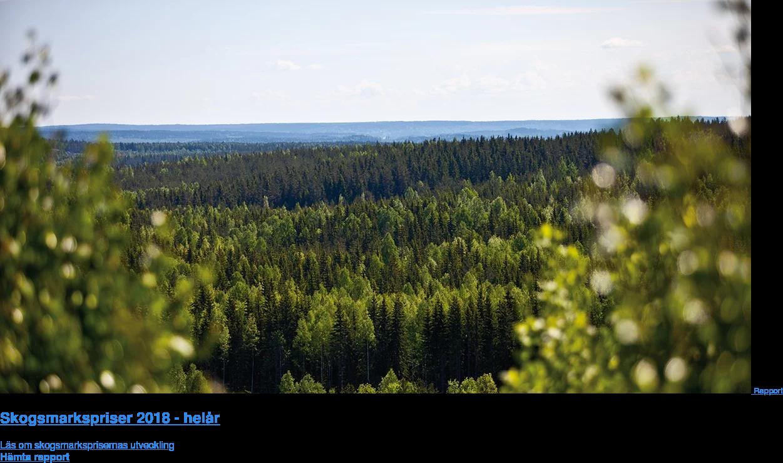 Rapport: Skogsmarkspriser 2018 - helår  Läs om skogsmarksprisernas utveckling Hämta rapport