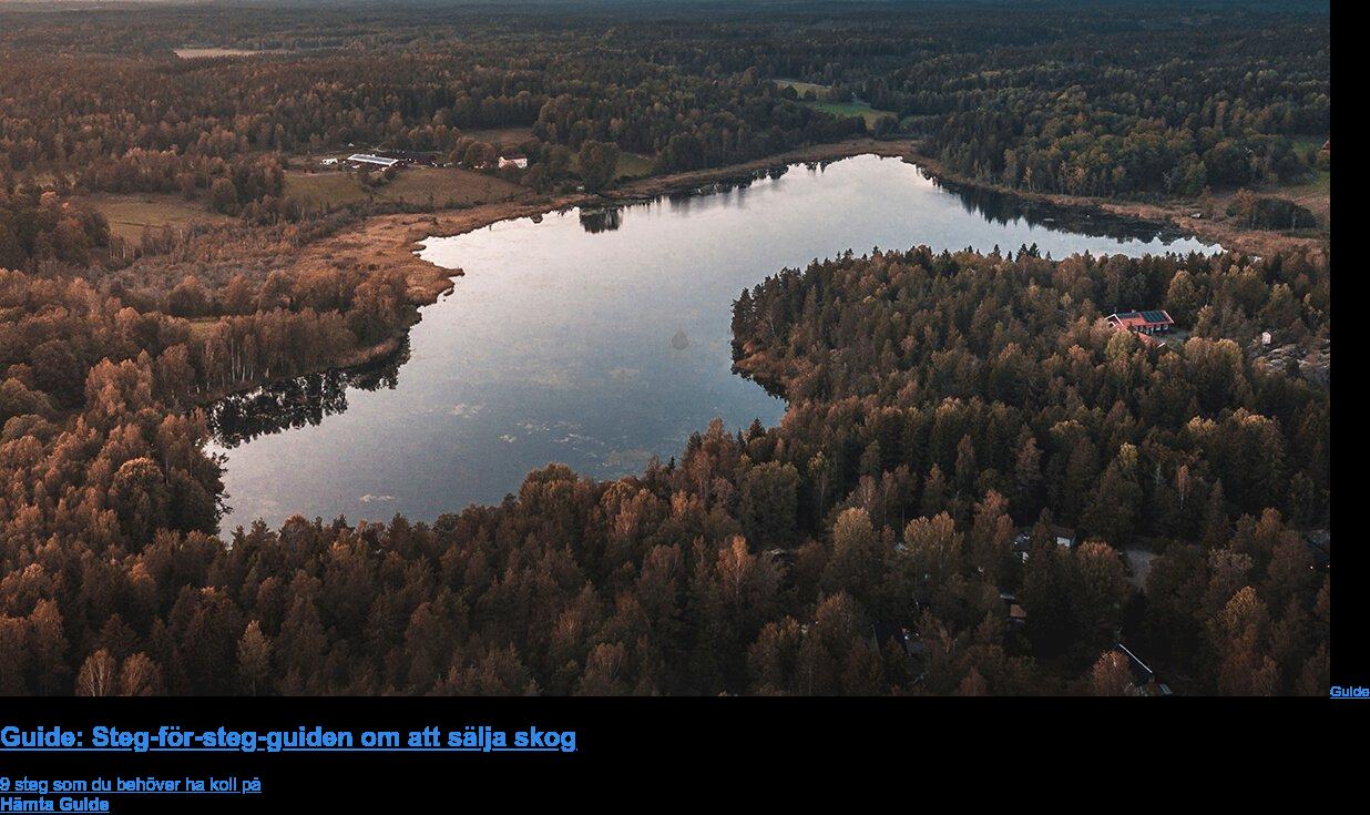 Guide  Guide: Steg-för-steg-guiden om att sälja skog  9 steg som du behöver ha koll på  Hämta Guide