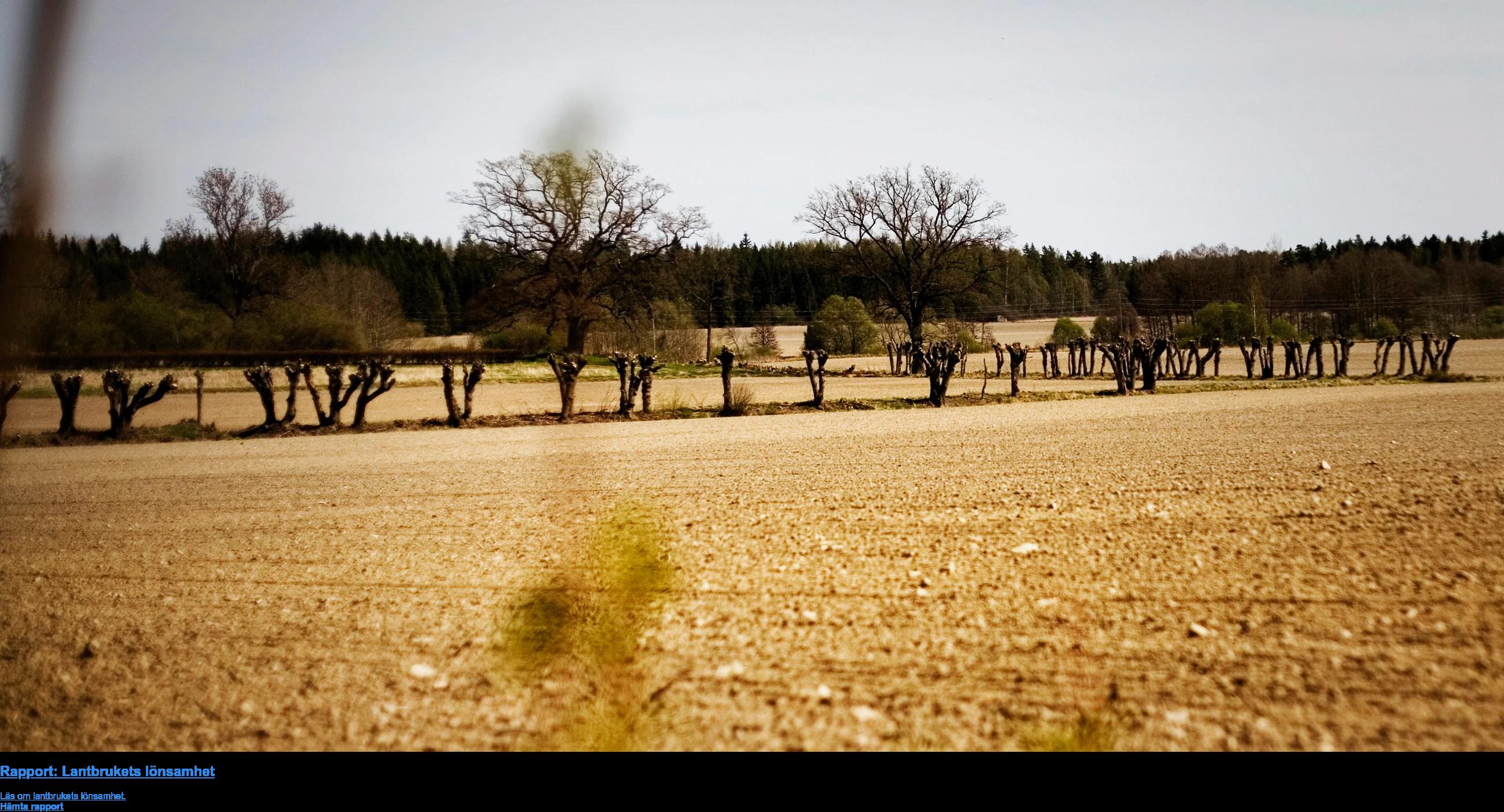 Rapport: Lantbrukets lönsamhet  Läs om lantbrukets lönsamhet. Hämta rapport