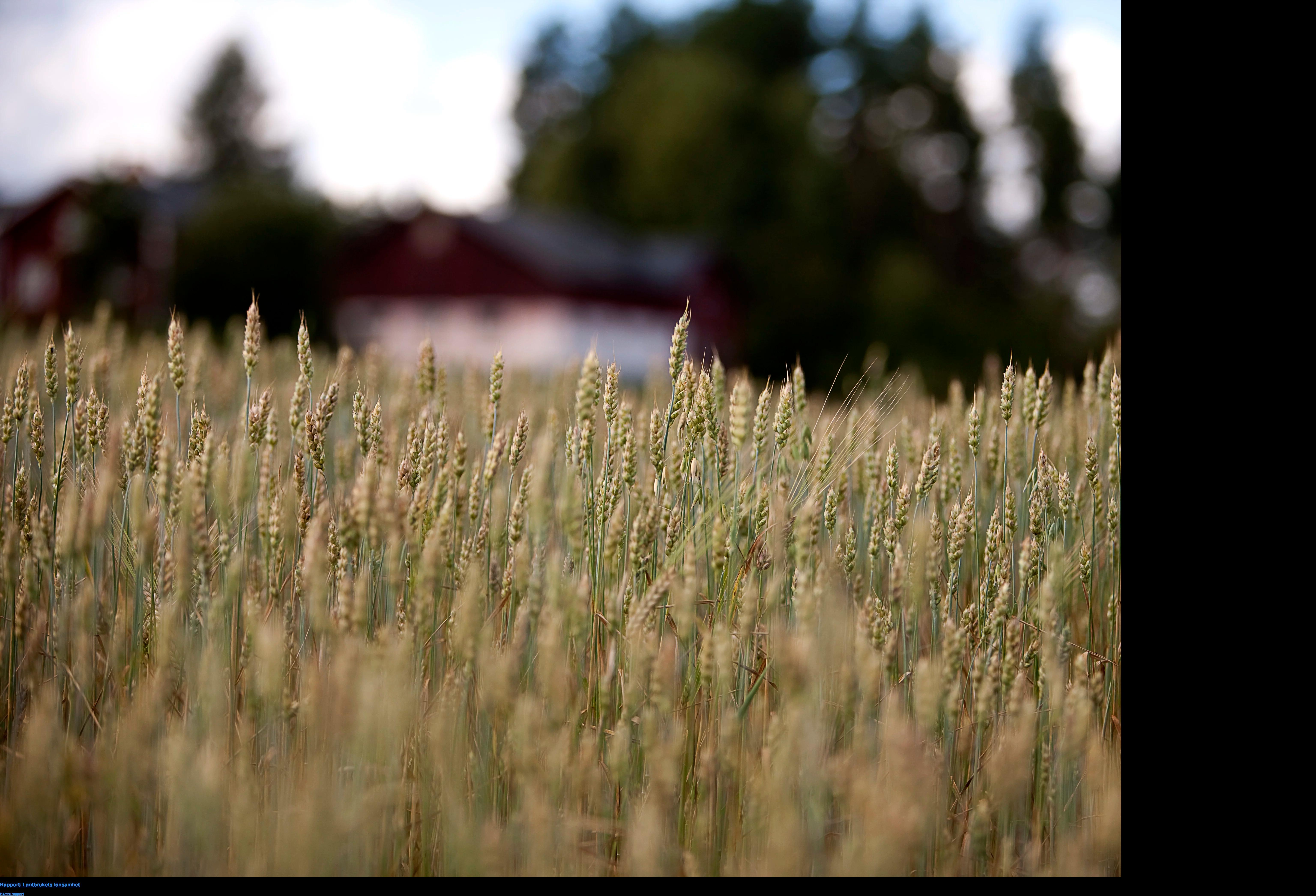 Rapport: Lantbrukets lönsamhet Hämta rapport