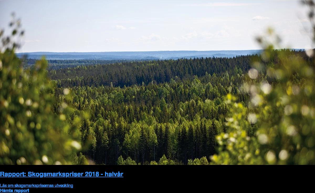 Rapport: Skogsmarkspriser 2018 - halvår  Läs om skogsmarksprisernas utveckling Hämta rapport