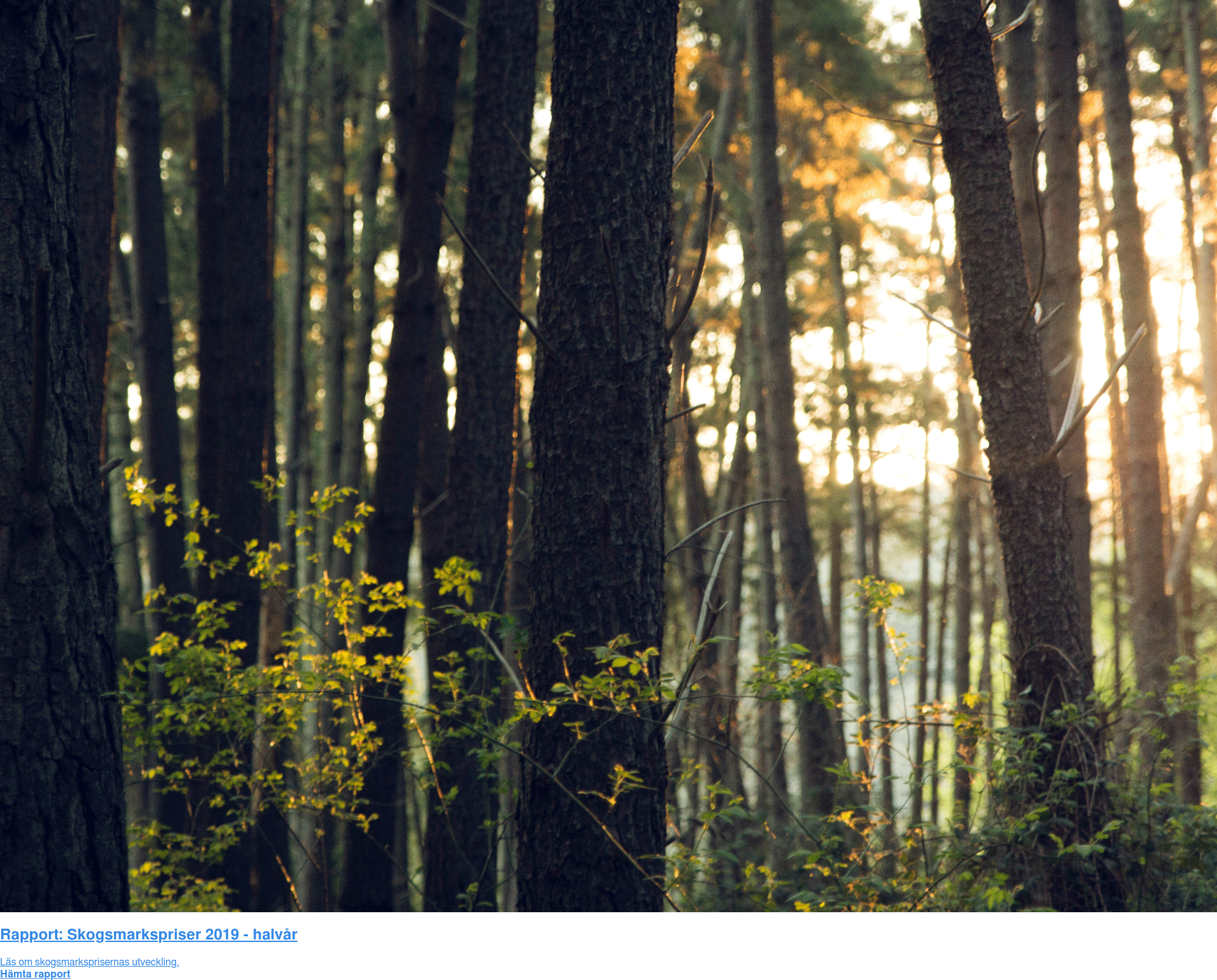 Rapport: Skogsmarkspriser 2019 - halvår  Läs om skogsmarksprisernas utveckling. Hämta rapport