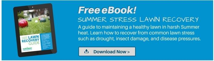 Download your free Summer  Stress Lawn Recovery Guide >