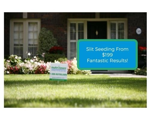Vancouver - Slit Seeding From $199