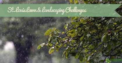Lawn and Landscaping Challenges