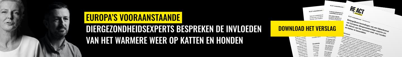 REACT Expert Opinion Banner Desktop NL