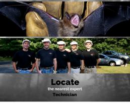 Get Bats Out expert removal technicians