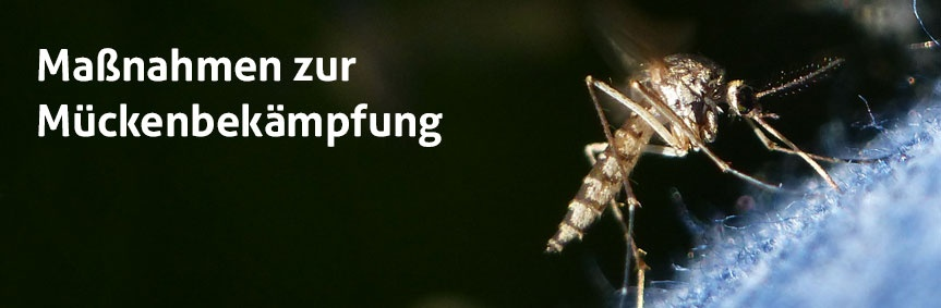 Sinnvolle Maßnahmen zur Mückenkontrolle
