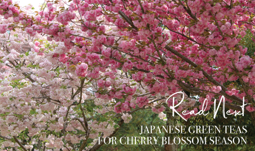 Read-Next-Japanese-Green-Teas-For-Cherry-Blossom-Season