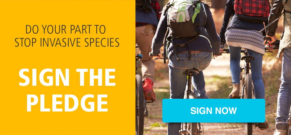 sign-the-pledge-CTA-blog