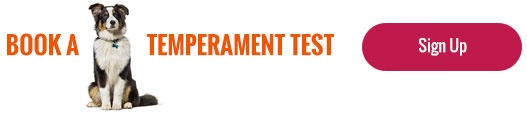Central Pet Doggy Daycare Temperament Test