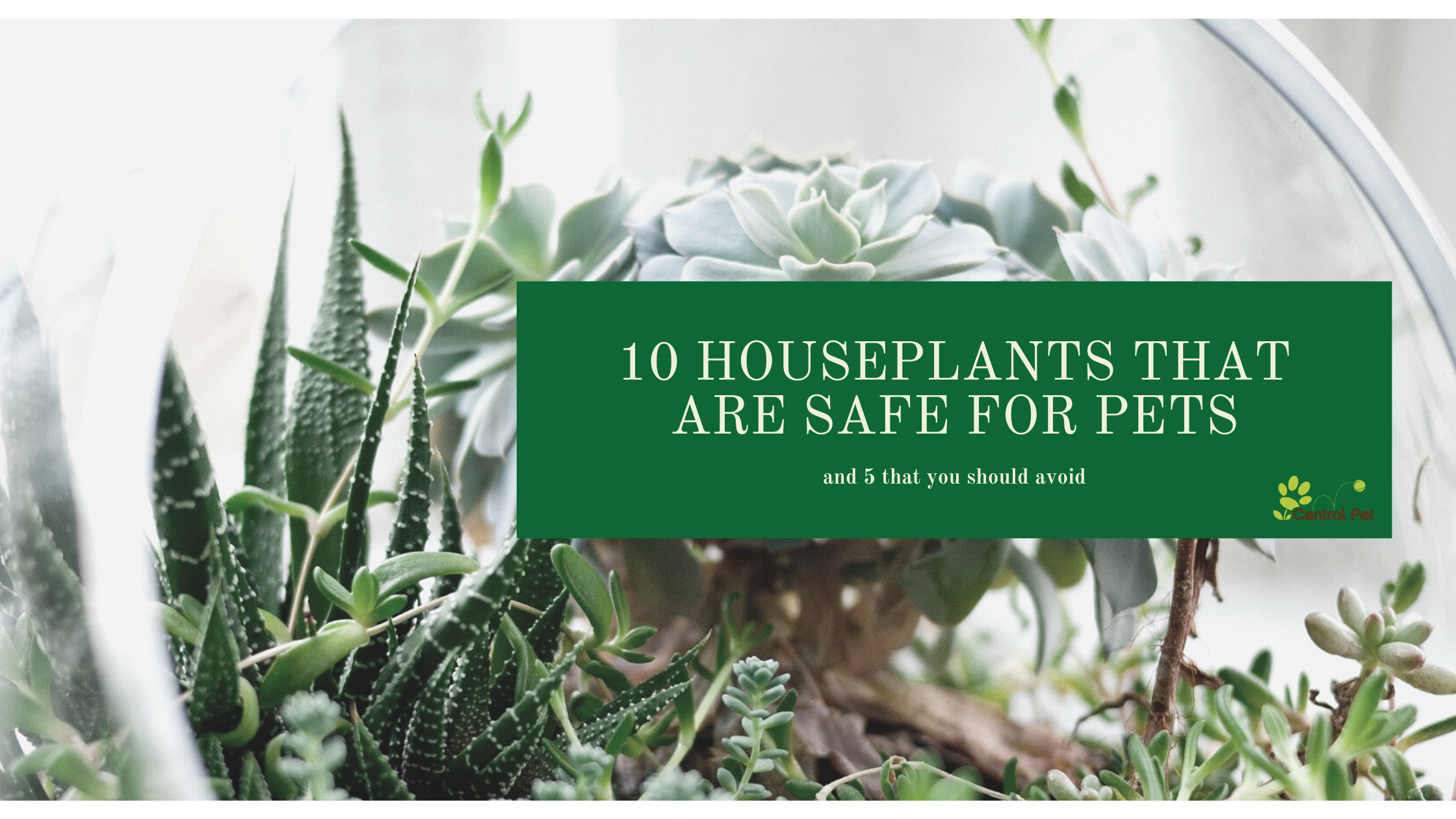10 houseplants that are safe for pets