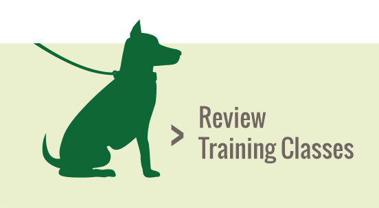 Review Dog Training Classes at Central Pet