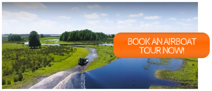 book a one hour airboat tour with wild florida