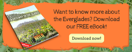 Everglades eBook
