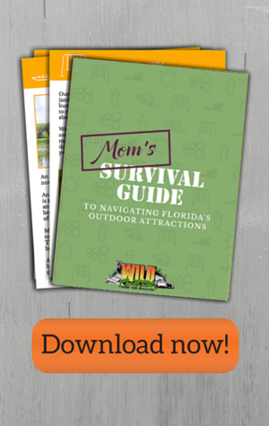 mom's survival guide sidebar cta