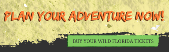 Book your adventure at Wild Florida
