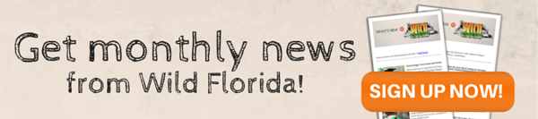 Wild Florida monthly newsletter