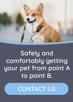 My-Pet-Cab-Contact-Us