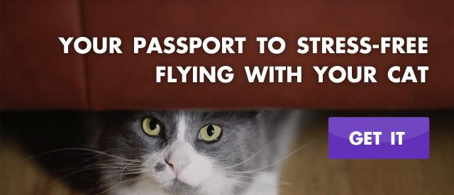 Flying with your Cat