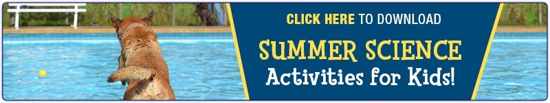"Dog jumping into pool -- ""Summer Science Activities for Kids -- Download Free eBook"""