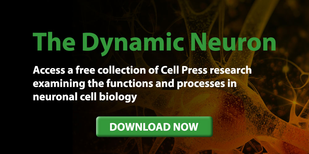Download The Dynamic Neuron Selection
