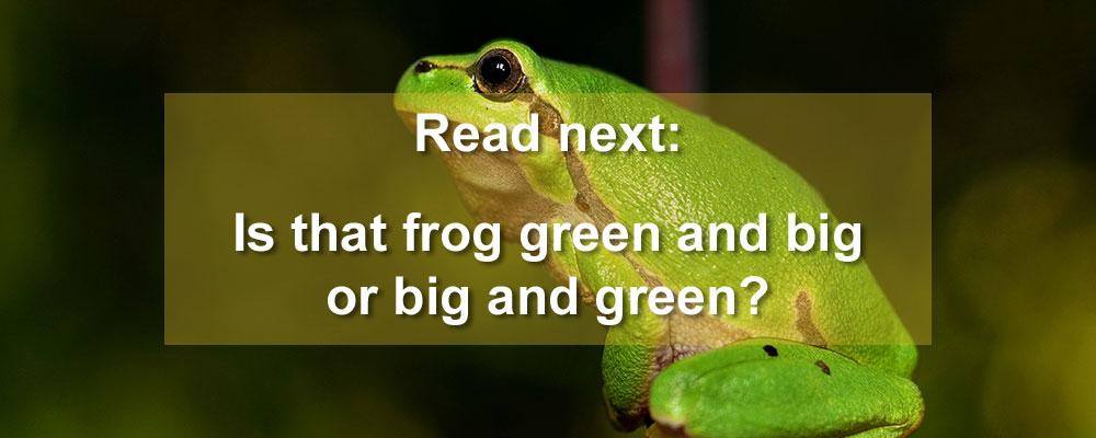 Let this frog help you determine adjective order (image courtesy of Pixabay)