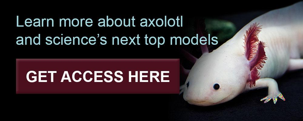 Learn more about axolotl in Cell