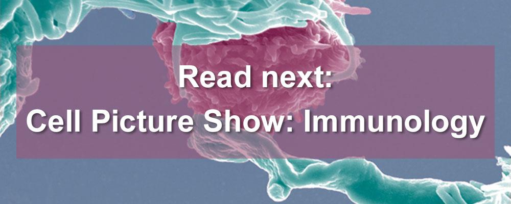 Cell Picture Show: Immunology