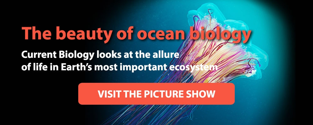 Visit the Cell Picture Show on the Ocean