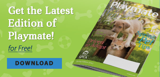 Get the Latest Edition of Playmate for Free