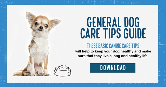 Download the dog care guide