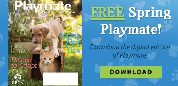 Free Spring Playmate