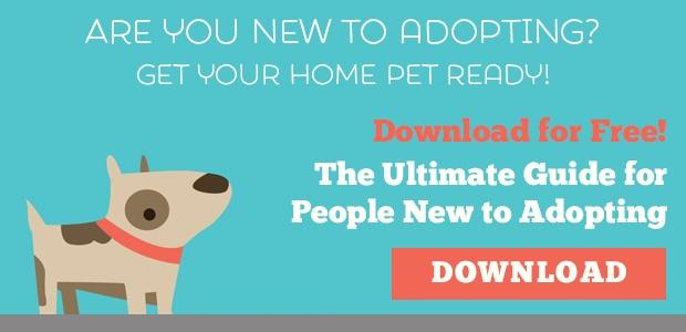 What to do After You Adopt a Pet