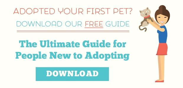 Download our Free guide! What to do After You Adopt a Pet