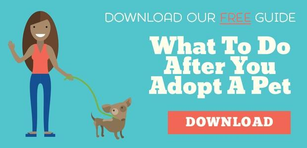 Download the free Guide - What to do after you adopt a pet
