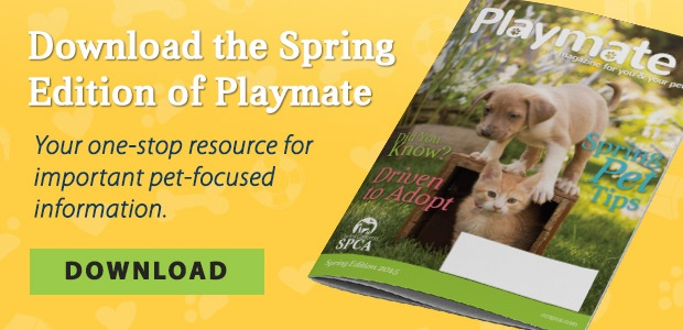 Download the Spring Edition of Playmate