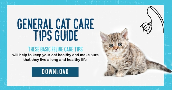Download the cat care guide