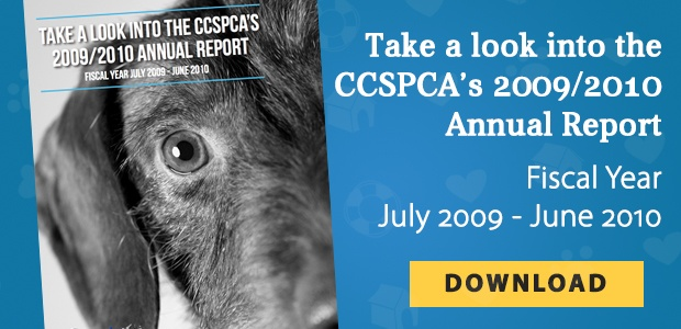 Download the CCSPCA 2009/2010 Annual Report