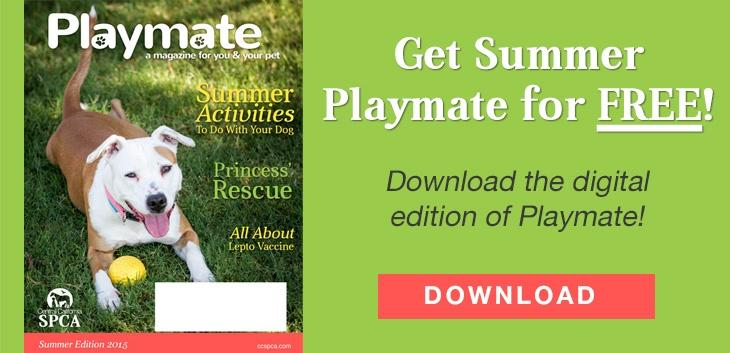 Get Summer Playmate for Free!