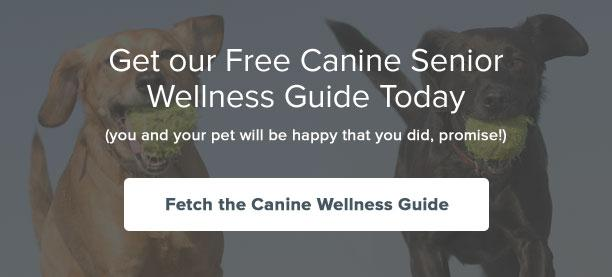 Fetch our free Canine Senior Wellness Care Guide