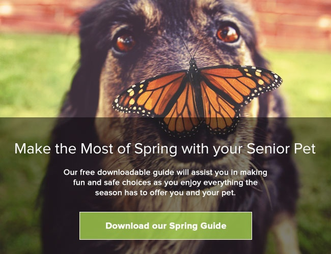 Download your Free Spring Guide for Senior Pets