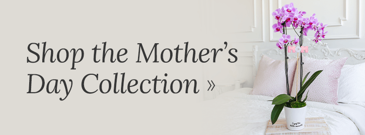 Shop the Mother's Day Collection of Orchids and Houseplants