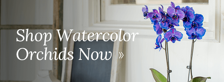 shop-watercolor-orchids