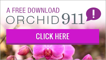 Orchid 911