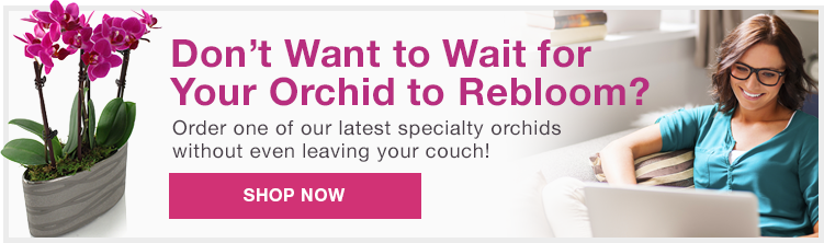 Don't want to wait for you orchid to rebloom?