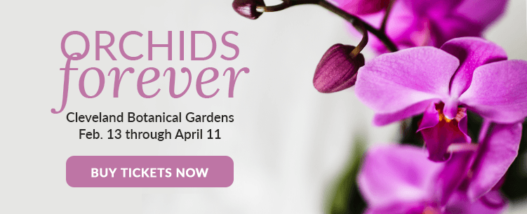 Buy Tickets to Orchids Forever, Event Sponsored by Just Add Ice Orchids