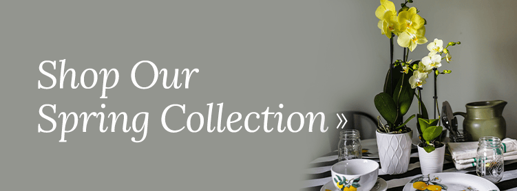 Shop Our Spring Collection of Orchids and Houseplants