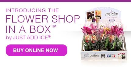 Buy Orchids Online